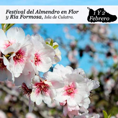 enclave-deportivo-almendro-en-flor-ria-formosa-2b-