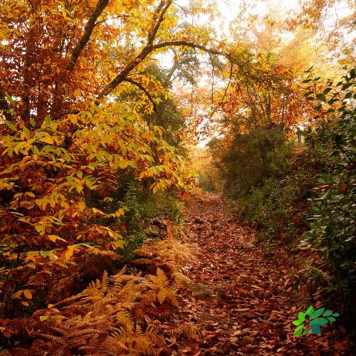 enclave-deportivo-ruta-en-el-parque-castañas-senderismo2