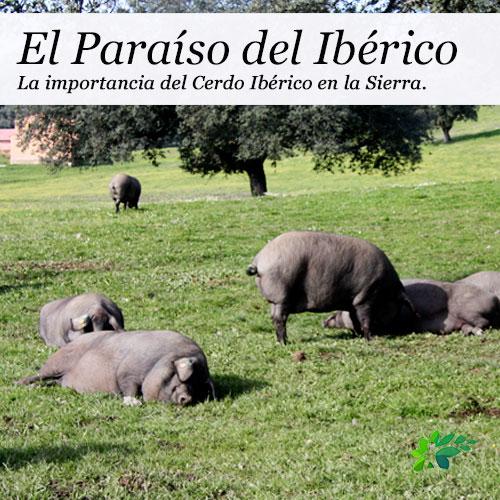 enclave-deportivo-ruta-en-el-parque-cerdo-iberico