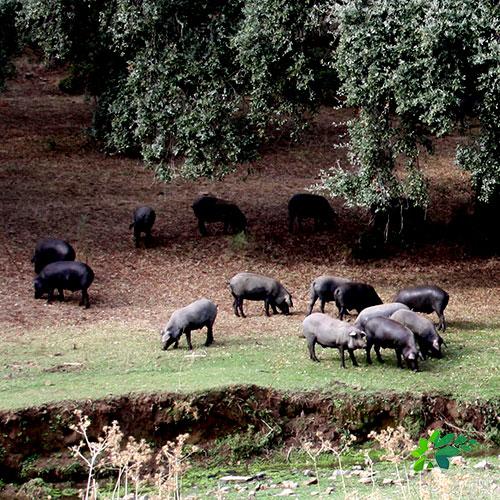 enclave-deportivo-ruta-en-el-parque-cerdo-iberico2