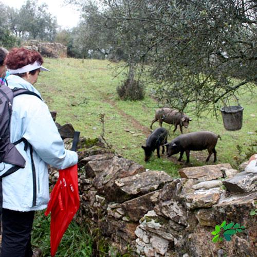 enclave-deportivo-ruta-en-el-parque-cerdo-iberico3