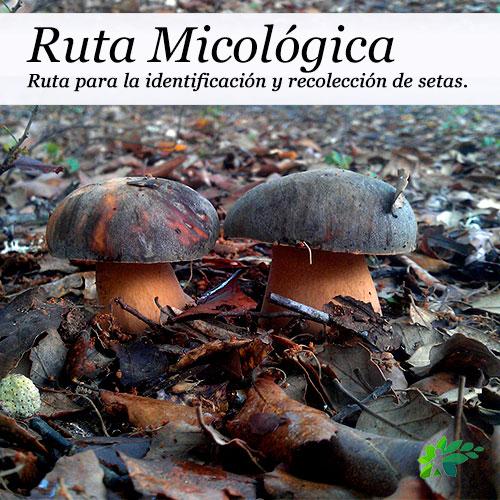 enclave-deportivo-rutas--senderismo-parque-natural-micológicas