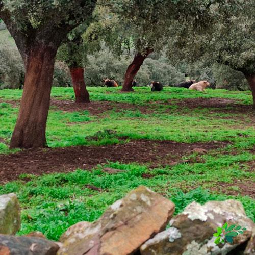 nderismo-aracena-parque-natural-toro