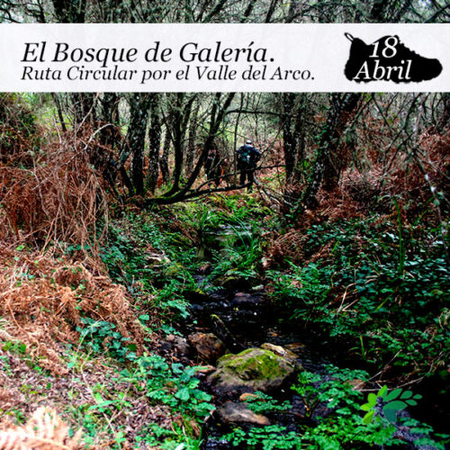 enclave-deportivo-senderismo-bosque-de-galeria2021