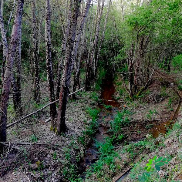 enclave-deportivo-senderismo-bosque-de-galeria22021