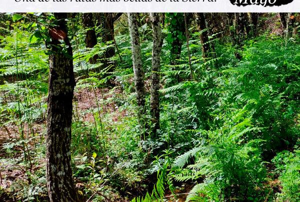 enclave-deportivo-bosque-encantado
