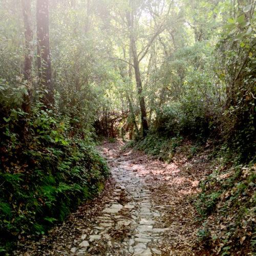 enclave-deportivo-bosque-encantado2