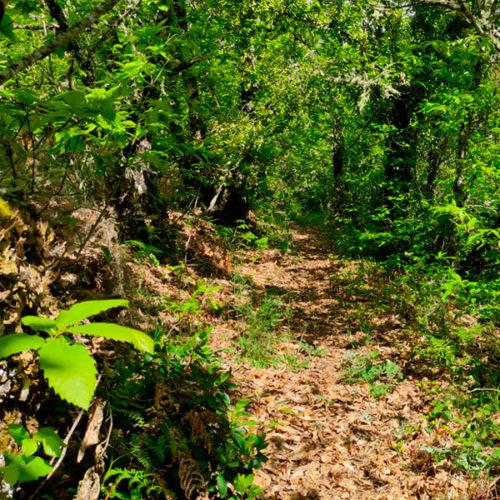 enclave-deportivo-bosque-encantado3