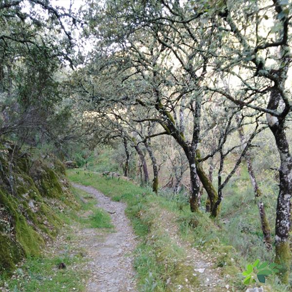 enclave-deportivo-senderismo octubre-ribera de la escalada4
